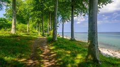 beautiful trees beach wallpaper download