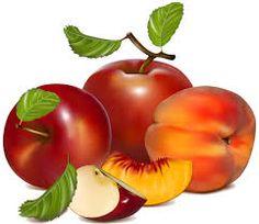 meyve resimleri ile ilgili görsel sonucu