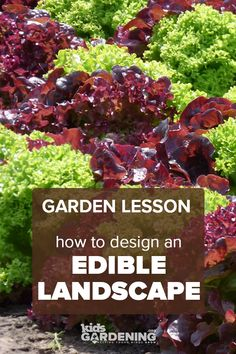 This garden lesson teaches kids about edible landscaping and includes instructions for planting lettuce seeds to create a functional and aesthetically pleasing school garden. Connected to Next Generation Science Standards, too! Red Flowers, Spring Flowers, Types Of Lettuce, School Gardens, Perennial Vegetables, Next Generation Science Standards, Ornamental Plants, Edible Plants
