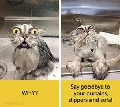 Cat Facial Expressions Express Their Deep Hilarious Thoughts - World's largest collection of cat memes and other animals Cute Cats, Funny Cats, Funny Animals, Cat Memes, Funny Memes, Hilarious, Human Face Drawing, Cat Expressions, Funny Cat Pictures