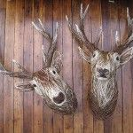 Beautiful stag heads made in natural wicker by Bob Johnston.