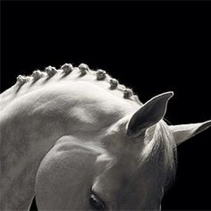 Equine photography is just awesome.