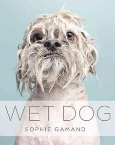 Wet Dog (Hardcover)