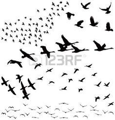 fliegende vögel: Silhouette ein Vogelschwarm