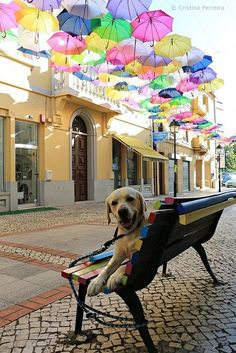 Colorful street umbrellas Águeda - Portugal / Buddy loves!