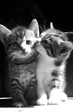...kitty kisses....