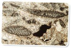 Hvilke oplysninger kan radiocarbon dating fortælle paleontologer dating sims pc download