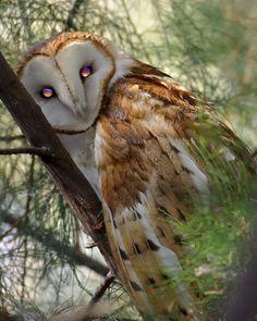 a beautiful owl..