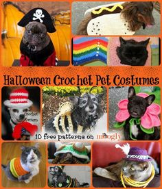 Remember to include the fur-babies in this year's costume planning! 10 free #crochet pet costume patterns, roundup on Moogly!