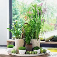 Zimmerpflanzen auf Schale