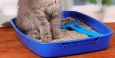 Stinkende kattenbak? Door dit handige huis-, tuin- en keuken middel blijft 'ie veel langer fris