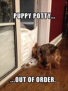 Dump A Day Attack Of The Funny Animals With Captions - 24 Pics