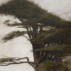 Lebanese Cedar, Alexei Begat