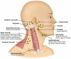 cervical lymph nodes - Google Search