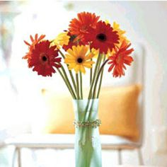 Let that someone special in your life know they are on your mind with the charm of fresh Orange Gerberas!!  See More: I have a flower store there are many different flower gift.Actually Anniversary Flower gift is very nice.Free delivery and satisfied grantee.Order here. http://www.purplerose.ca/