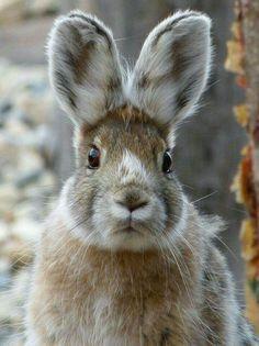 Wild #rabbit ~ETS