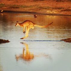 Hopping around in Renmark, SA. #Australia