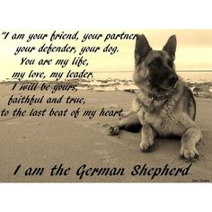 I babysat 2 German Shepherds and I know this. They both defended me (there was an elderly gentleman and he hated them and hit them, he threatened me and they did not like it)