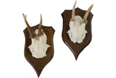 Small Mounted Antlers, Pair