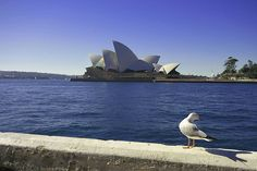Sydney Opera House by spidey78_nl, via Flickr Opera House, Sydney, Photo And Video, World, Travel, Viajes, Trips, Traveling, Tourism