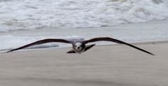 Gulf Shores, Alabama 10/13