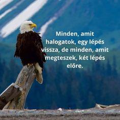 Célok Bald Eagle, Animals, Animales, Animaux, Animal, Animais