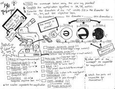 Ecology Coloring sheet , Food Web Energy Pyramid, Food