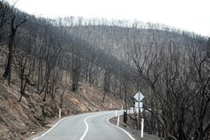 Road near Kinglake after the Black Saturday Bushfires.