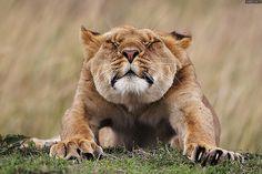"""在全球享有极高知名度的""""年度野生动物摄影师""""可谓是生态摄影圈的奥斯卡奖。"""