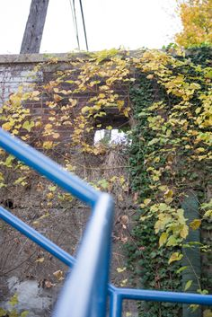 city steps and ivy