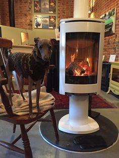 #Raven Stoves had a special visitor today ENZO (italian Greyhound) who was feeling the cold.After 10 minutes by the fire he was able to take off his scarf and jumper! Hes hoping his owner will buy the #Jøtul #F373 he's standing next to www.jotuluk.com