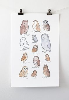 Illustrated Owl Species Chart Whimsical Art Print by 100owls