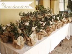 Olive Trees with Doves -Favors or Centerpieces