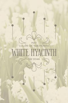 Sherwin-Williams' May Color of the Month: White Hyacinth (SW 0046)