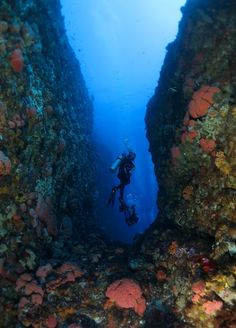 There are also several other types of diving excursions available at Komodo Island, including wall-diving. Photo by Radi...