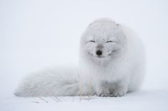 Winter Fur - Imgur