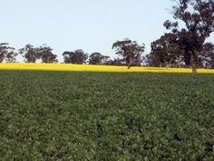 Commercial Farm For Lease In SA Country South. Ray White Bordertown and District have various Properties available in all areas of Agriculture. To find more such properties in SA Country South visit http://www.commercialproperty2sell.com.au/real-estate/sa/sa-country-south/