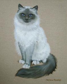Cat portraits. Blue Birman - Stephanie Manchipp