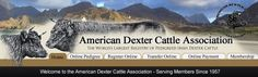 American Dexter Cattle Association - Dexter cattle will be perfect for my farm. Dexter Cattle, Mini Cows, Small Breed, Livestock, Farm Life, Farm Animals, Homesteading, Gardening, American