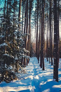 Trail in the woods [photographer unclear, location unknown]❄️cr.