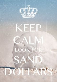 keep calm look for sand dollars / Created with Keep Calm and Carry On for iOS #keepcalm #sanddollars #beachvibes