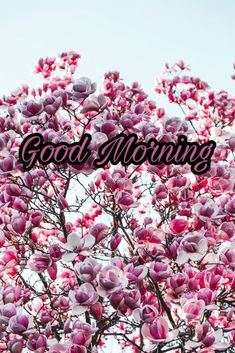 Good Morning Flowers Images 2020 - Best New Collection Lovely Good Morning Images, Latest Good Morning, Good Morning Images Download, Good Morning Flowers, Good Morning Love, Good Night Image, Good Morning Wishes, Most Beautiful Flowers, Love Flowers