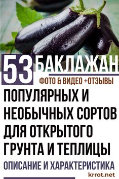 Eggplant, Cucumber, Zucchini, Vegetables, Food, Lawn And Garden, Essen, Eggplants, Vegetable Recipes