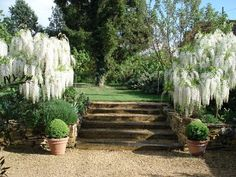 A plant-lovers garden in Dordogne Landscape Design, Garden Design, Lavender Cottage, White Plants, Dordogne, Wisteria, Garden Plants, Porch, Patio