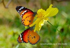 Flutterbyes - I love to call them this too