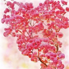 Ipe-Pink  Ipê-Rosa  -  Digital Painting  Pintura Digital  -  Elizabeth Barros