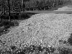 What do we do with all of the rocks that work their way up through the soil? Some of them we crush down to gravel, adding it to roadways around the property for added traction. ~ at Culmina Family Estate Winery