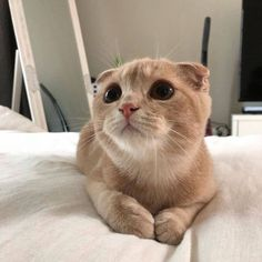 These cute cats will make you amazed. Cats are amazing friends. I Love Cats, Crazy Cats, Cute Cats, Cute Baby Animals, Animals And Pets, Funny Animals, Kittens Cutest, Cats And Kittens, Pet Dogs