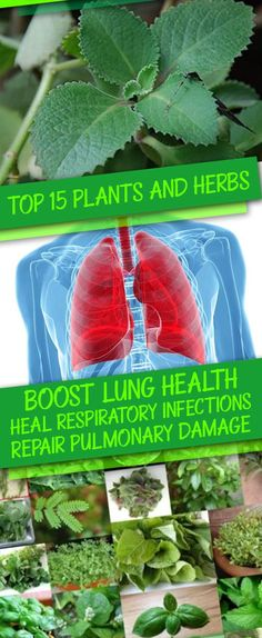 Boost Lung Health, Heal Respiratory Infections...
