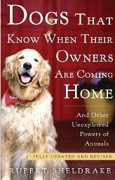 """Read """"Dogs That Know When Their Owners Are Coming Home Fully Updated and Revised"""" by Rupert Sheldrake available from Rakuten Kobo. With a scientist's mind and an animal lover's compassion, world-renowned biologist Rupert Sheldrake presents a groundbre. Rupert Sheldrake, Dog Books, Animal Books, Work With Animals, Cat Carrier, Can Dogs Eat, Biologist, Book Nooks, Dog Training Tips"""